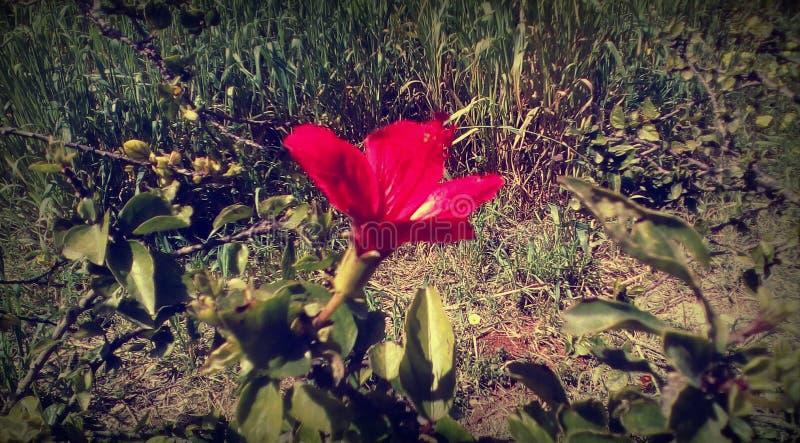 Λουλούδι στη φύση στοκ φωτογραφία με δικαίωμα ελεύθερης χρήσης
