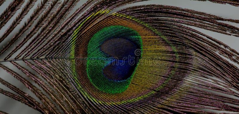 Μάτι/φτερό ενός Peacock στοκ φωτογραφία με δικαίωμα ελεύθερης χρήσης