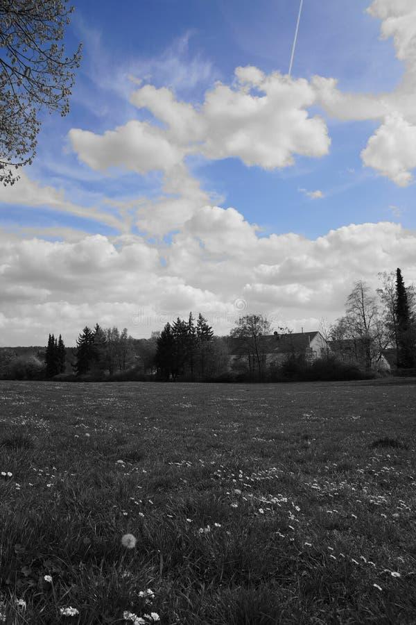 Μαύροι άσπροι μπλε δάσος και ουρανός λιβαδιών στοκ εικόνες με δικαίωμα ελεύθερης χρήσης