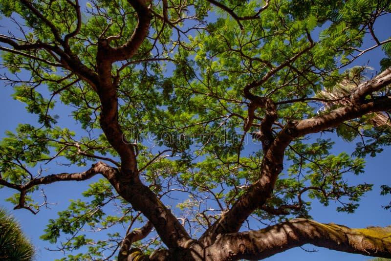 Μεγάλη άποψη στον ουρανό με μια στέγη δέντρων στοκ φωτογραφίες