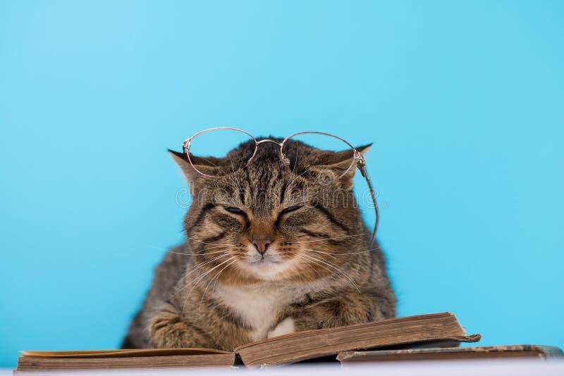 Μια γάτα με τα γυαλιά κάθεται κοντά σε ένα ανοικτό βιβλίο στοκ φωτογραφία με δικαίωμα ελεύθερης χρήσης