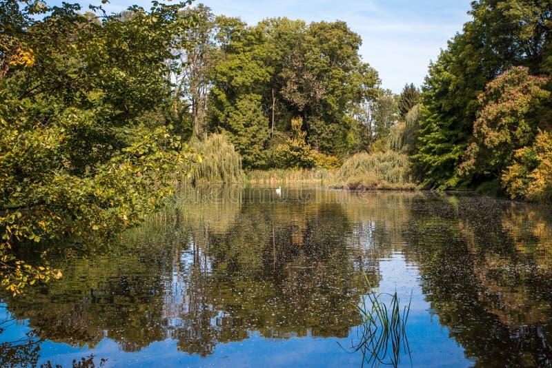 Μια λίμνη που βλέπει στο δάσος στοκ φωτογραφίες