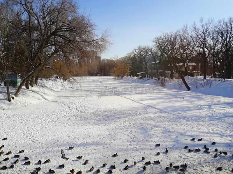 Μια παγωμένη λίμνη στο πάρκο στοκ φωτογραφία με δικαίωμα ελεύθερης χρήσης