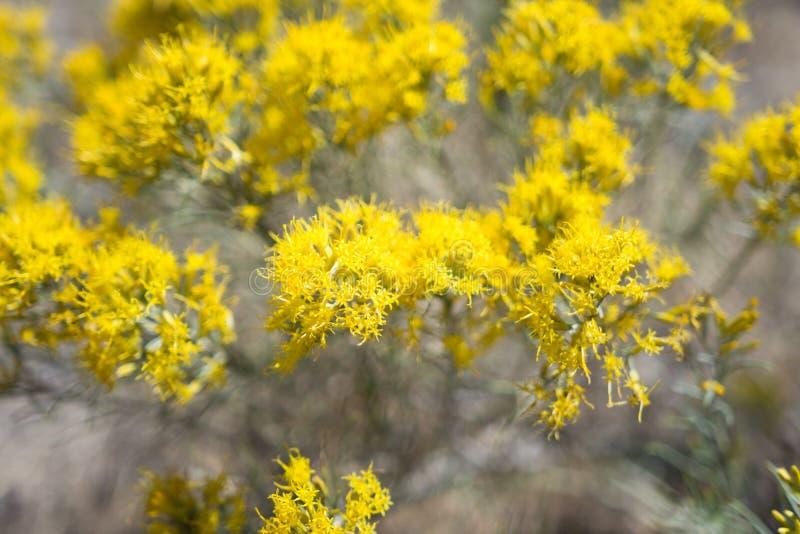 Μικρά κίτρινα άγρια λουλούδια στοκ φωτογραφίες με δικαίωμα ελεύθερης χρήσης