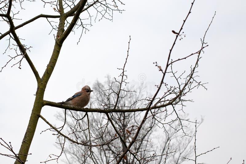 Μικρό πουλί στον κλάδο δέντρων στοκ φωτογραφία με δικαίωμα ελεύθερης χρήσης