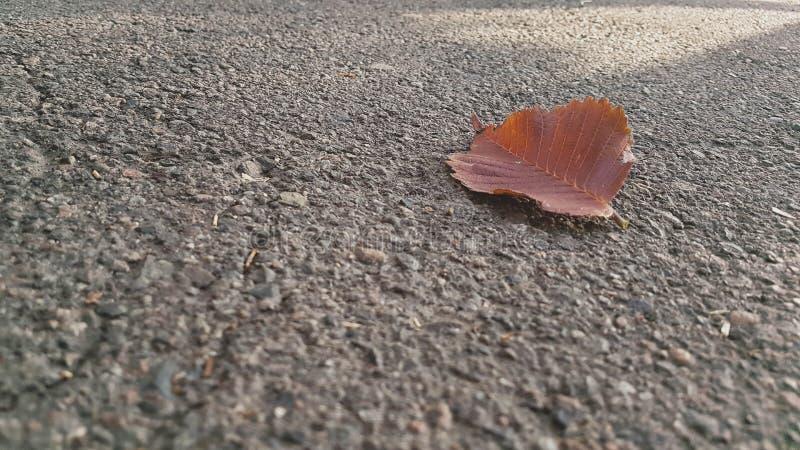 Μόνο φύλλο που βρίσκεται στο δρόμο ασφάλτου στο πάρκο στοκ εικόνα με δικαίωμα ελεύθερης χρήσης