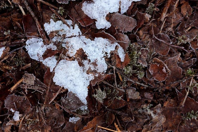 Μπάλωμα του κρυστάλλινου παγωμένου πάγου μεταξύ των παγωμένων νεκρών φύλλων στοκ φωτογραφία με δικαίωμα ελεύθερης χρήσης