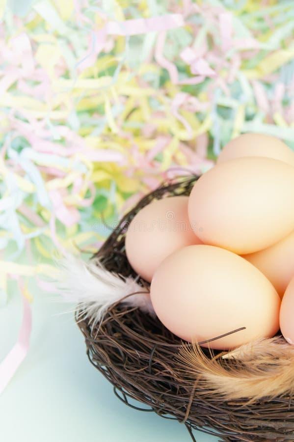 Μπεζ αυγά και φτερά σε μια φωλιά από τους κλάδους στοκ εικόνα με δικαίωμα ελεύθερης χρήσης