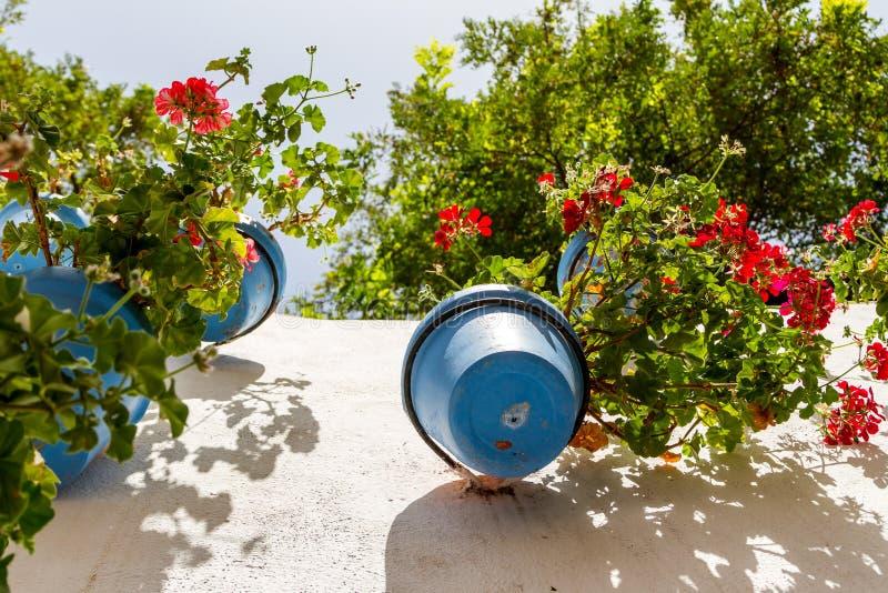 Μπλε flower-pots σε έναν ασπρισμένο τοίχο στοκ εικόνα