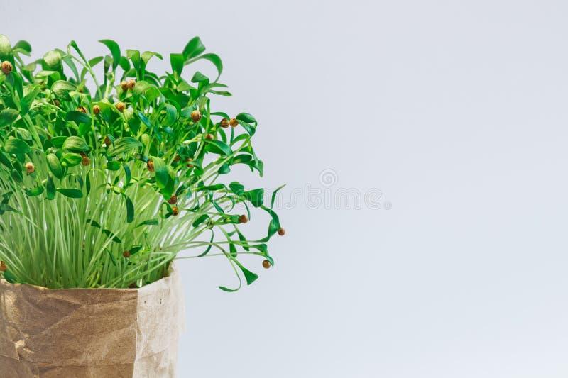 Νέο eco σωλήνων πράσινων εγκαταστάσεων στοκ εικόνες με δικαίωμα ελεύθερης χρήσης