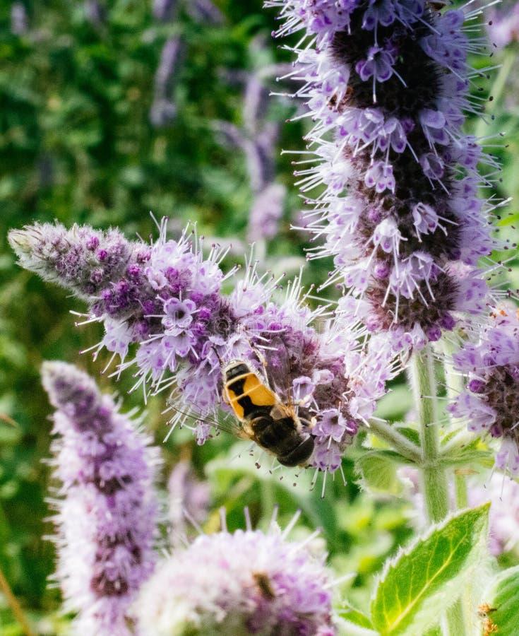 να ταΐσει εντόμων με ένα λουλούδι στοκ εικόνα με δικαίωμα ελεύθερης χρήσης