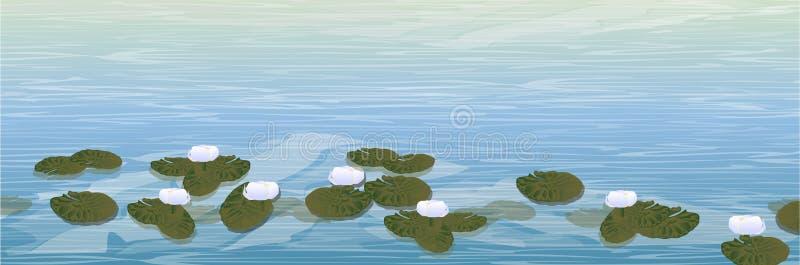 Νερό Μια λίμνη με τους άσπρους κρίνους νερού διανυσματική απεικόνιση