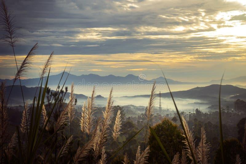 Ξηρά χλόη καλάμων με τη misty αιχμή βουνών στο σούρουπο στοκ φωτογραφίες
