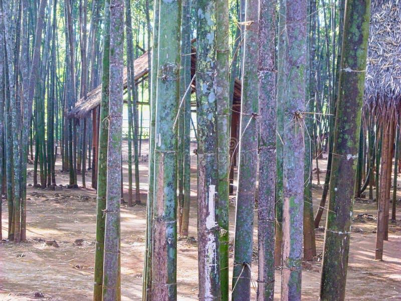 ξύλα μπαμπού σε ένα πάρκο στοκ εικόνες με δικαίωμα ελεύθερης χρήσης