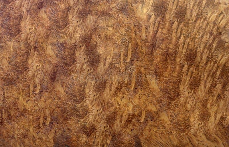 Ξύλινος ριγωτός Burl για το εσωτερικό αυτοκίνητο διακοσμήσεων τυπωμένων υλών εικόνων, εξωτικό ξύλινο όμορφο σχέδιο για τις τέχνες στοκ εικόνα με δικαίωμα ελεύθερης χρήσης
