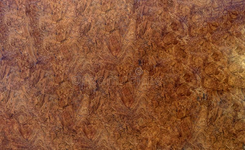 Ξύλινος ριγωτός Burl για το εσωτερικό αυτοκίνητο διακοσμήσεων τυπωμένων υλών εικόνων, εξωτικό ξύλινο όμορφο σχέδιο για τις τέχνες στοκ εικόνες