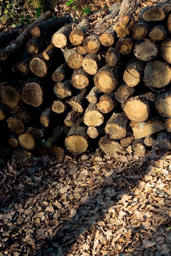 Ξύλινος συνδέεται ένα δάσος στην επίδειξη στοκ εικόνα