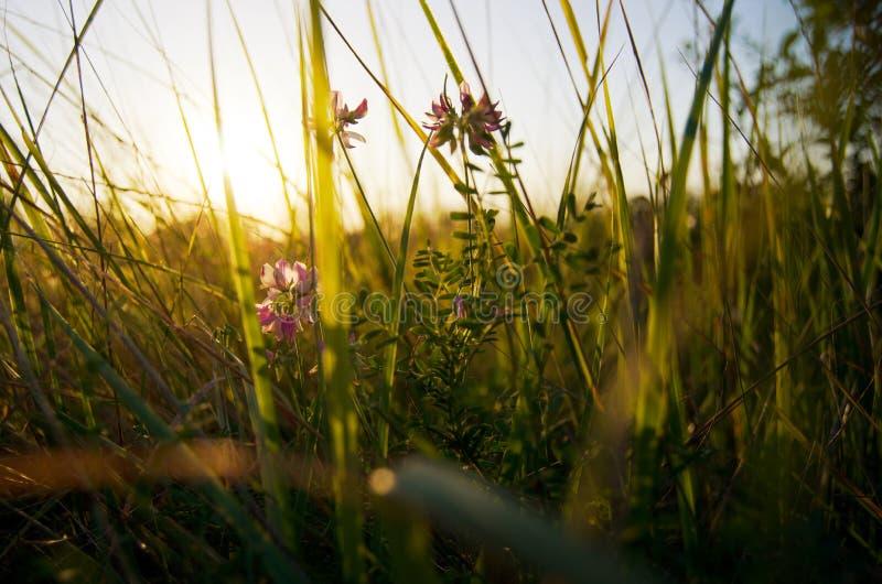Ξύπνημα πρωινού της φύσης στοκ φωτογραφίες με δικαίωμα ελεύθερης χρήσης