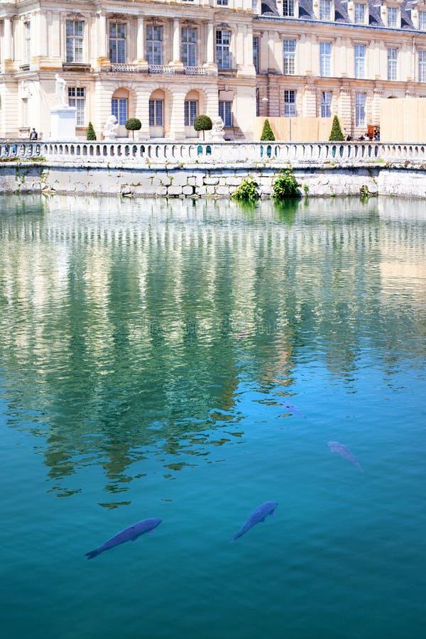 Οι κυπρίνοι κολυμπούν στη λίμνη του πάρκου του Φοντενμπλώ στοκ φωτογραφία