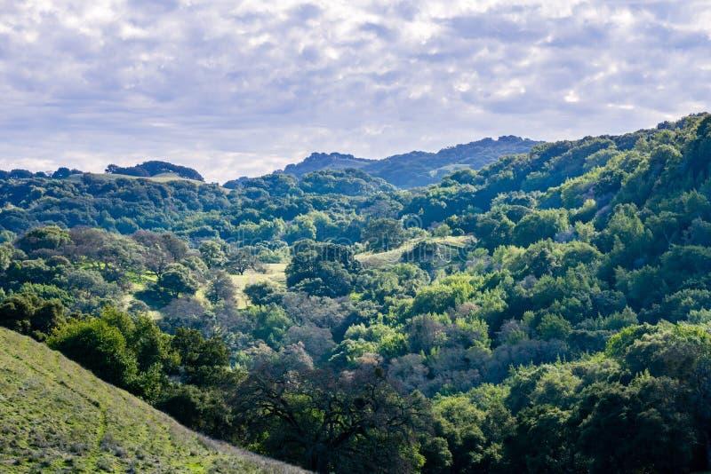 Οι λόφοι και οι κοιλάδες Briones του περιφερειακού πάρκου, περιοχή κόλπων ενάντιων νομών πλευρών, ανατολικό Σαν Φρανσίσκο, Καλιφό στοκ φωτογραφία με δικαίωμα ελεύθερης χρήσης