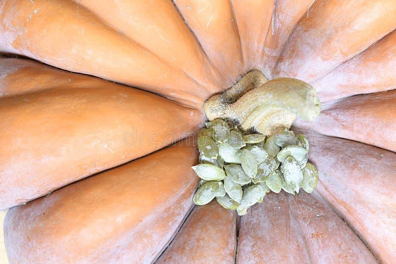 Οι σπόροι κολοκύθας βρίσκονται σε μια πορτοκαλιά κολοκύθα στοκ φωτογραφία με δικαίωμα ελεύθερης χρήσης