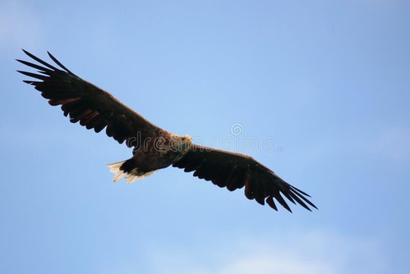 Ολίσθηση στον ουρανό Lofoten με την τεράστια έκταση στοκ εικόνα με δικαίωμα ελεύθερης χρήσης