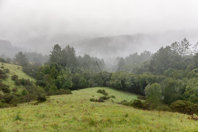 Ομιχλώδεις απόψεις των δέντρων πεύκων και των κυλώντας λόφων από το ίχνος ήλιων στην κοιλάδα μύλων στοκ φωτογραφία με δικαίωμα ελεύθερης χρήσης