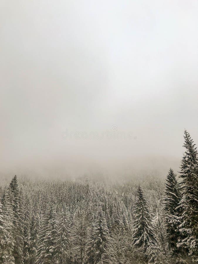 Ομιχλώδες τοπίο βουνών της Misty με το δάσος έλατου, Tatry, Πολωνία στοκ εικόνες