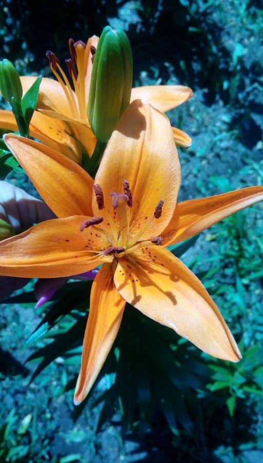 Ομορφιά των νότιων λουλουδιών στοκ εικόνα