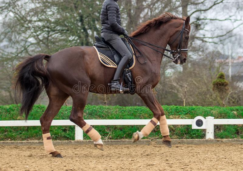 Οδήγηση πλατών αλόγου, καλός ιππικός στοκ εικόνες
