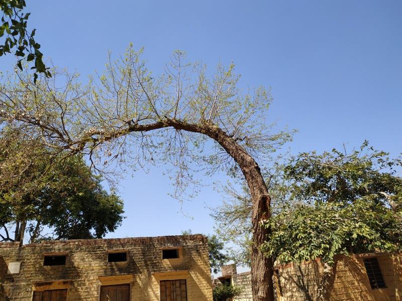 Ουρανός δέντρων στοκ εικόνες με δικαίωμα ελεύθερης χρήσης