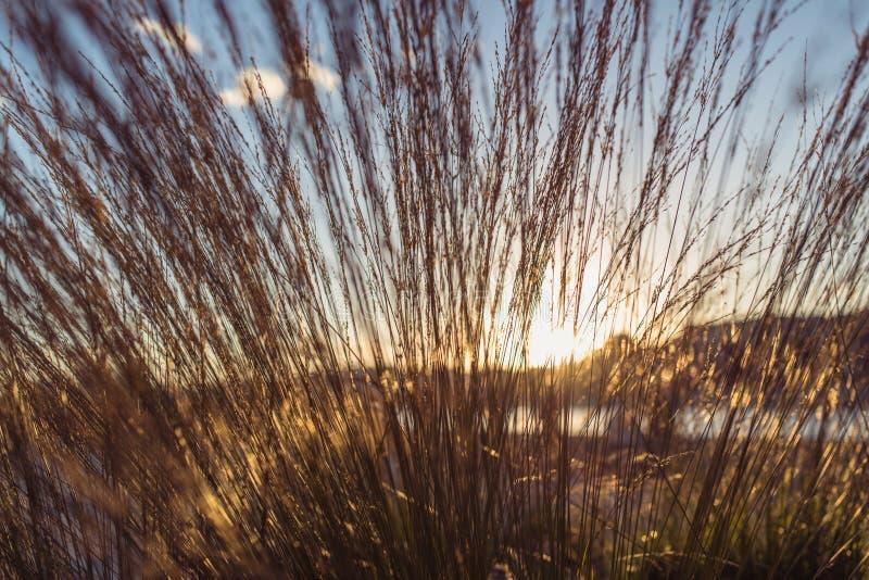 Ο άγριος τομέας της χλόης στο ηλιοβασίλεμα, μαλακές ακτίνες ήλιων, θερμός τονισμός, φακός καίγεται στοκ εικόνα με δικαίωμα ελεύθερης χρήσης
