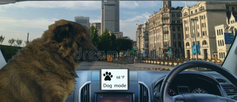 Ο έξυπνος αυτόνομος τρόπος σκυλιών και σκοπών χρήσης αυτοκινήτων για να προστατεύσει ή να φρουρήσει το αυτοκίνητο και το κατοικίδ στοκ εικόνα με δικαίωμα ελεύθερης χρήσης