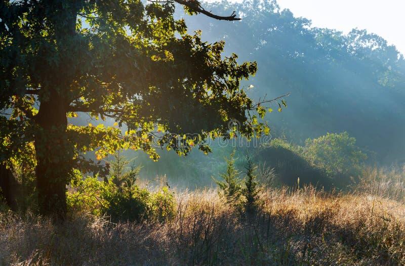 Ο ήλιος αύξησης περιέρχεται στο misty δασικό τρόπο στα θερμά χρώματα του φθινοπώρου στοκ φωτογραφία με δικαίωμα ελεύθερης χρήσης