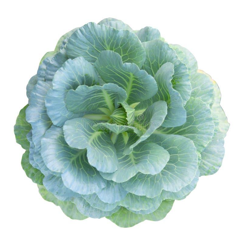 Ο κινεζικός Kale που απομονώνεται στο άσπρο υπόβαθρο στοκ φωτογραφίες με δικαίωμα ελεύθερης χρήσης