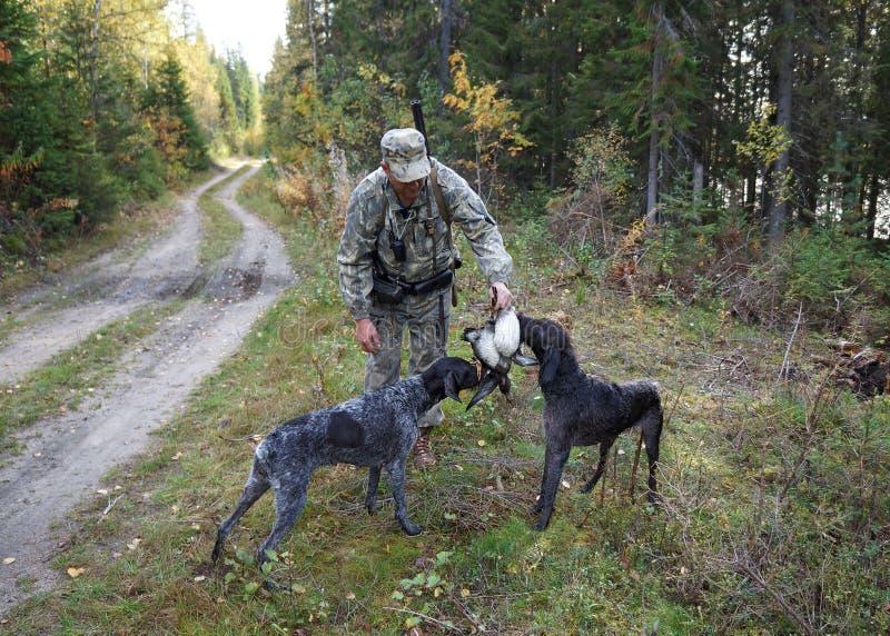 Ο κυνηγός παίρνει το θήραμα από δύο σκυλιά κυνηγιού στοκ εικόνα