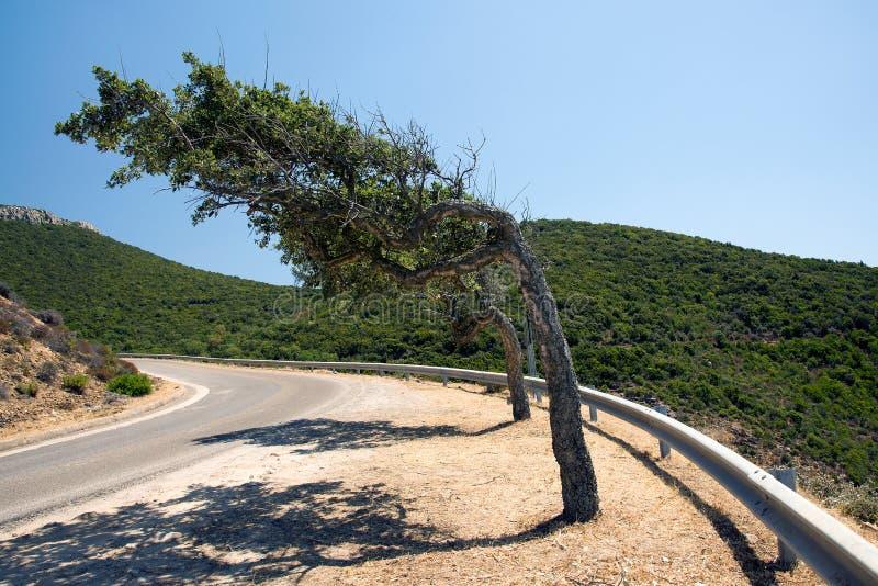 Ο μαΐστρος διαμορφώνει τα δέντρα στη Σαρδηνία στοκ εικόνα