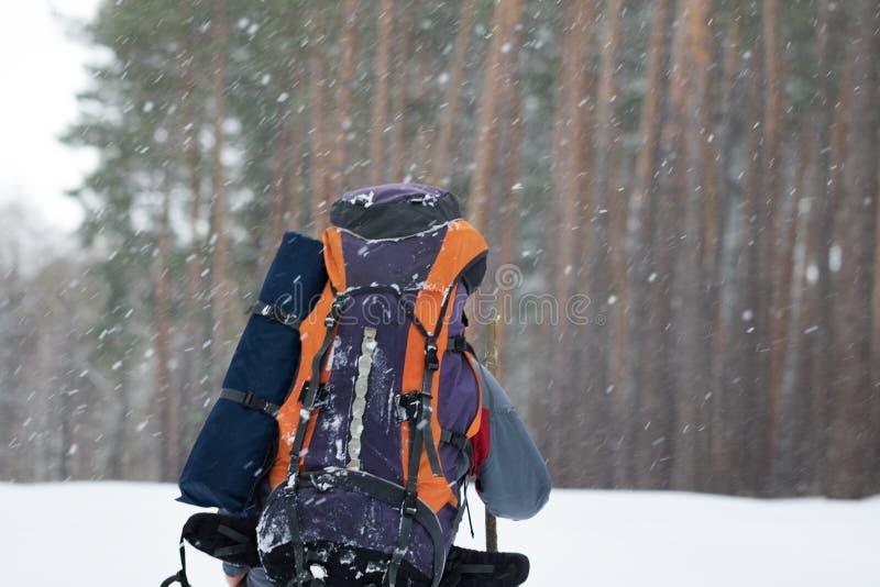 Ο οδοιπόρος με το μεγάλο σακίδιο πλάτης πηγαίνει στο χιονώδες δάσος πεύκων στις χειμερινές χιονοπτώσεις στοκ φωτογραφίες με δικαίωμα ελεύθερης χρήσης