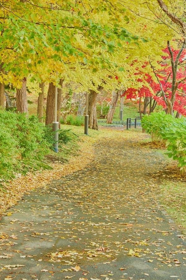 Ο όμορφος δονούμενος δρόμος χρώματος, κίτρινο, κόκκινο, πράσινο φύλλο στο πάρκο Koen κατά τη διάρκεια της εποχής φυλλώματος φθινο στοκ εικόνες με δικαίωμα ελεύθερης χρήσης