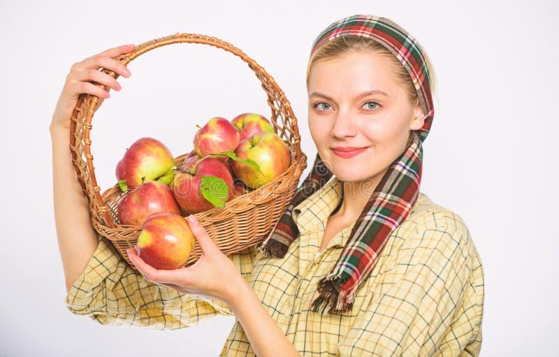 Ο χωρικός γυναικών φέρνει τα φυσικά φρούτα καλαθιών Αγροτικό καλάθι λαβής ύφους κηπουρών γυναικών με τα μήλα στο άσπρο υπόβαθρο στοκ εικόνες