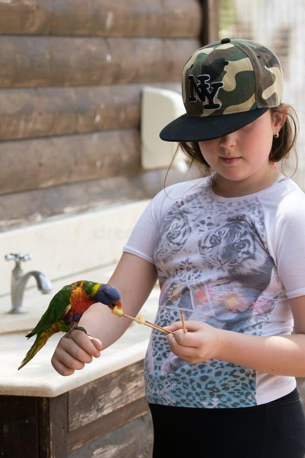 Ο παπαγάλος Lori - Loriinae - κάθεται στο βραχίονα του κοριτσιού και τρώει ένα μήλο στο ζωολογικό κήπο γκουρού Gan σε Kibbutz Nir στοκ φωτογραφία με δικαίωμα ελεύθερης χρήσης