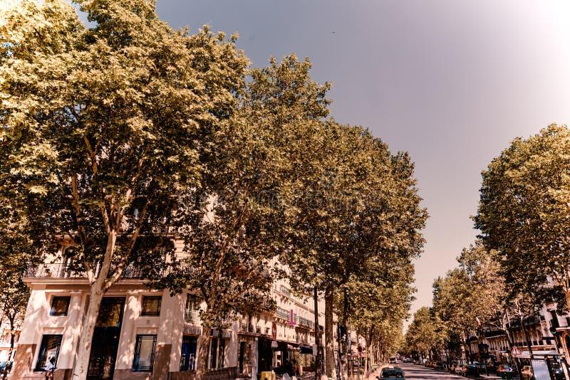 Δέντρα σε ένα σταυροδρόμι στο Παρίσι στοκ εικόνες