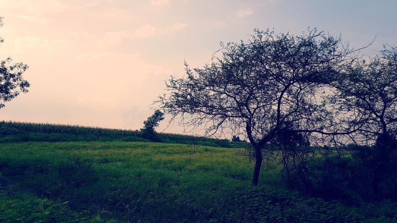 Δέντρα φθινοπώρου, χλόης και Shedded!!! στοκ εικόνες