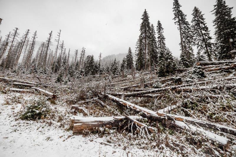 Δέντρα χιονιού τοπίων και καταρριφθε'ν δάσος δέντρων το χειμώνα Βουνά στην ανασκόπηση Morske Oko, Πολωνία στοκ φωτογραφία με δικαίωμα ελεύθερης χρήσης