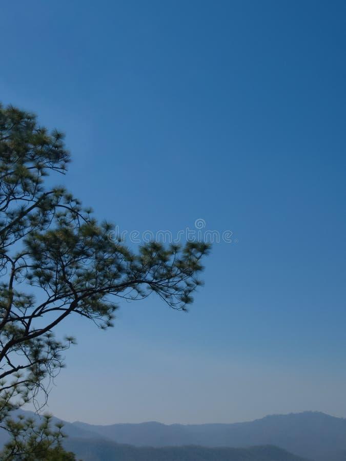 Δέντρα πεύκων στο υπόβαθρο βουνών και φωτεινός μπλε ουρανός μια ασυννέφιαστη ημέρα για το φυσικό υπόβαθρο στοκ εικόνες με δικαίωμα ελεύθερης χρήσης