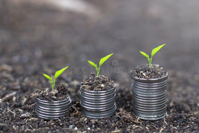 Δέντρα που αυξάνονται στα νομίσματα Ανάπτυξη εγκαταστάσεων στο σωρό νομισμάτων χρημάτων σωρός χρημάτων χεριών έννοιας νομισμάτων  στοκ εικόνες