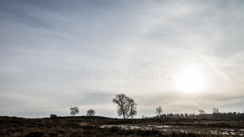 Δέντρο το φθινόπωρο Veluwe οι Κάτω Χώρες στοκ φωτογραφίες