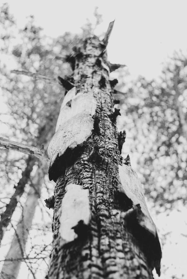 Δέντρο που καίγεται από την αστραπή στοκ εικόνες με δικαίωμα ελεύθερης χρήσης