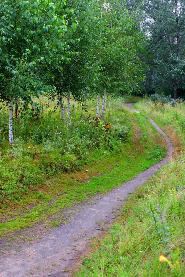 Δασική πορεία σε ένα όμορφο υπόβαθρο των πράσινων δέντρων σημύδων στοκ εικόνα