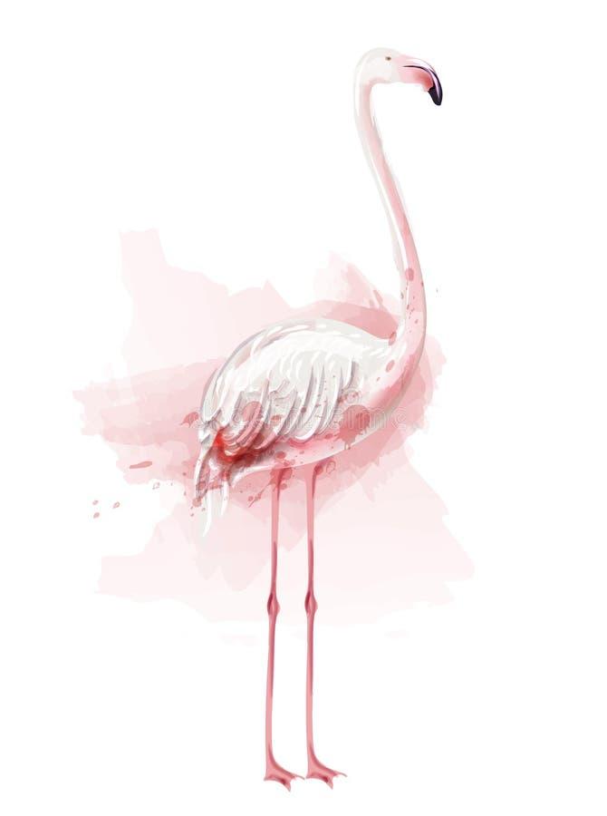 Διάνυσμα watercolor φλαμίγκο ρόδινο πουλί που απομονώνεται στις άσπρες απεικονίσεις ελεύθερη απεικόνιση δικαιώματος